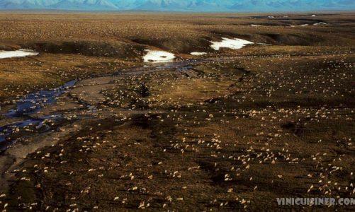 ไบเดนระงับการเช่าซื้อน้ำมัน ในที่ลี้ภัยอาร์กติกของอลาสก้า