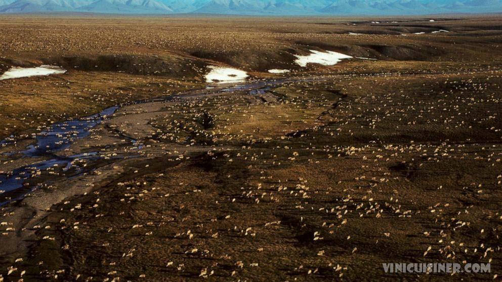 ไบเดนระงับการเช่าซื้อน้ำมัน ในที่ลี้ภัยอาร์กติกของอลาสก้า รัฐบาลไบเดนเมื่อวันอังคารที่ผ่านมาได้ระงับการเช่าน้ำมันและก๊าซในเขตรักษาพันธุ์สัตว์